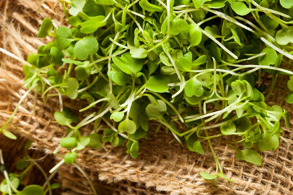 Our kitchen uses locally grown microgreens, herbs, and other produce in many salads and sandwiches